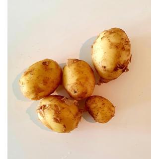 Frühkartoffeln Agate gewaschen